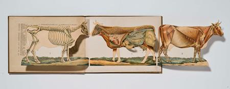Zerlegbare Modelle vom Pferd, Rind, Schaf, Schwein und Hund. Dr. M.A. Lampe Leipzig : Ernst Wiest Nachs, [ca.1890].