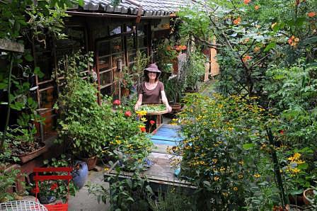 夏の庭のベニシア 写真:梶山正