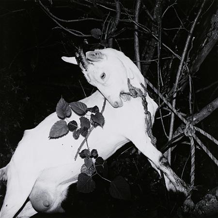〈風姿花伝〉より 『山形・銀山温泉』 1976年 東京都写真美術館蔵