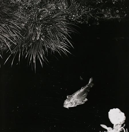 〈物草拾遺〉より 1981 年 東京都写真美術館蔵
