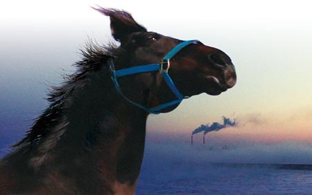 『祭の馬』 ©2013記録映画『祭の馬』製作委員会