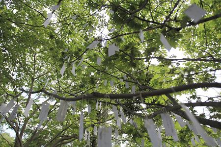 「十勝千年の森」の『北海道のための念願の木』 photo:Tomoharu Sasaki