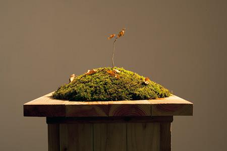 山本修路『実生の森 - 十和田のブナ』 2011 木材、土、植物 サイズ可変