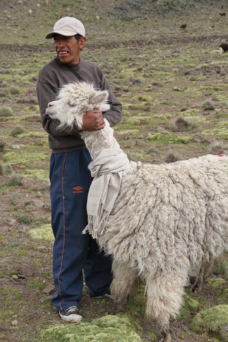 『毛を刈ったアルパカのために、そのアルパカの毛でマフラーを織る』増山士郎 2014年