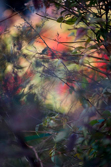 テリ・ワイフェンバック作品 ©Terri Weifenbach