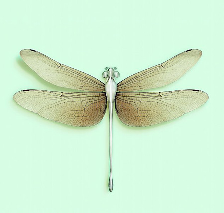 ©Vincent Fournier,  DRAGONFLY [Chloromgonfus detectis] Volatile inorganic-sensitive animal.