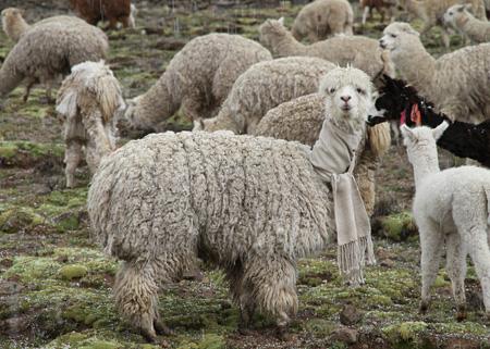 増山士郎『毛を刈ったアルパカのために、そのアルパカの毛でマフラーを織る / Weaving a woolen scarf for the alpaca I sheared using its own wool』