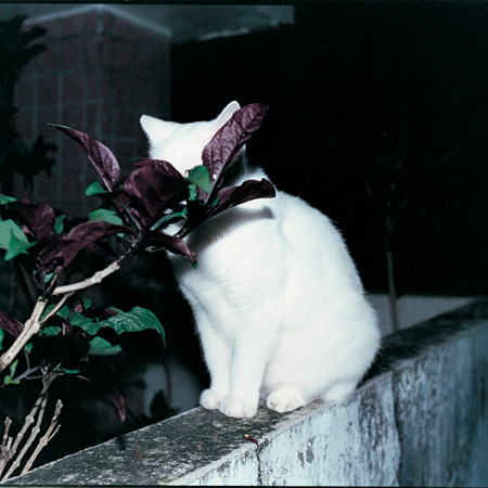 婦人倶楽部『東京カラー』ジャケット