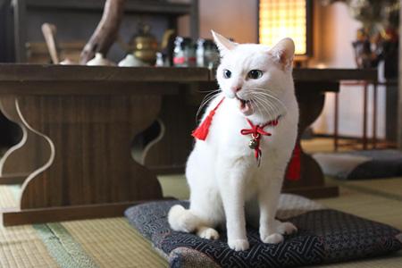 メイキング風景 ©2015「続・猫侍」製作委員会