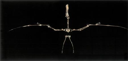 アンハングエラ(翼開長5mの翼竜)