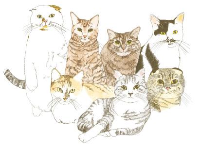 「Cat's ISSUE @Laforet」イメージビジュアル