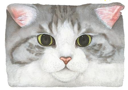 「Cat's ISSUE @Laforet」メインビジュアル