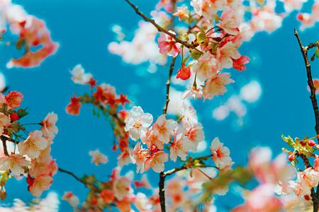蜷川実花『Acid Bloom』 ©mika ninagawa, Courtesy Tomio Koyama Gallery