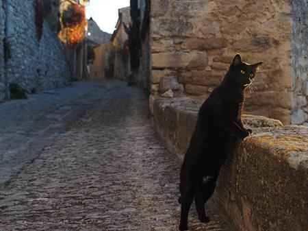 『写真展「岩合光昭の世界ネコ歩き」』展示作品イメージ ©MITSUAKI IWAGO