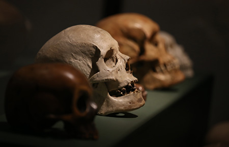 Damien Hirst's skulls collection (detail). Magnificent Obsessions The Artist as Collector, Barbican Art Gallery. ©Peter MacDiarmid, Getty images. Courtesy Murderme Collection