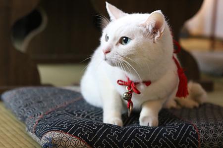 『猫侍』より玉之丞 ©2015「続・猫侍」製作委員会