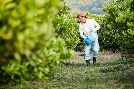 『大三島の柑橘農家』©Yusuke Nishibe