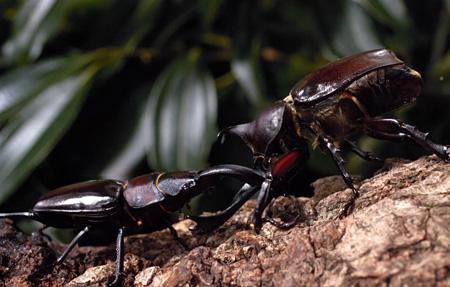 『アリのままでいたい』 ©2015「アリのままでいたい」