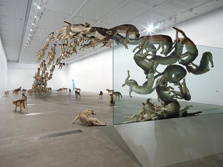 『壁撞き』2006年、狼のレプリカ(99体)・ガラス、 サイズ可変、ドイツ銀行によるコミッション・ワーク The Deutsche Bank Collection, Photo by Natasha Harth, QAGOMA, courtesy Queensland Art Gallery | Gallery of Modern Art