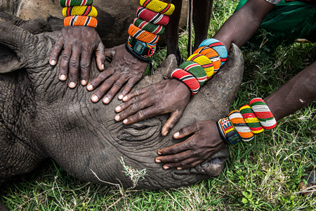 自然の部 単写真2位 アミ・ヴィタール(アメリカ、ナショナルジオグラフィック誌)ケニア北部、レワダウンズ自然保護区