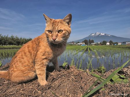 岩合光昭写真展『「ふるさとのねこ」津軽の四季、子ネコたちの物語。』より ©Mitsuaki Iwago