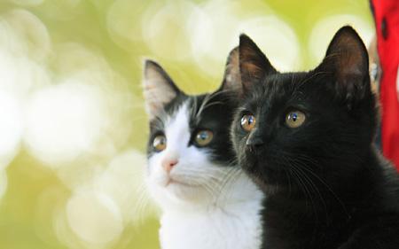 『猫なんかよんでもこない。』 ©2015杉作・実業之日本社/「猫なんかよんでもこない。」製作委員会