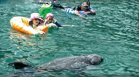 『ビハインド・ザ・コーヴ~捕鯨問題の謎に迫る~』 ©合同会社八木フィルム