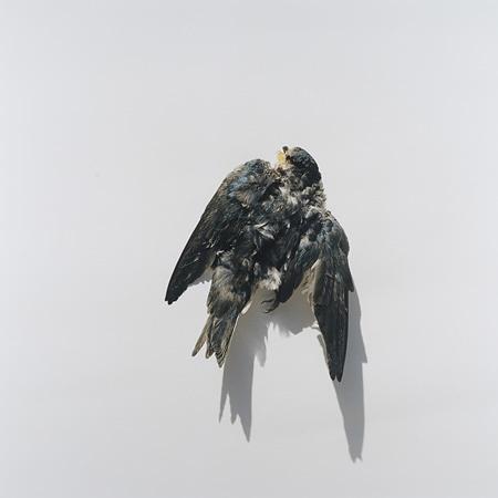 川内倫子『Illuminance − 無題』2009年