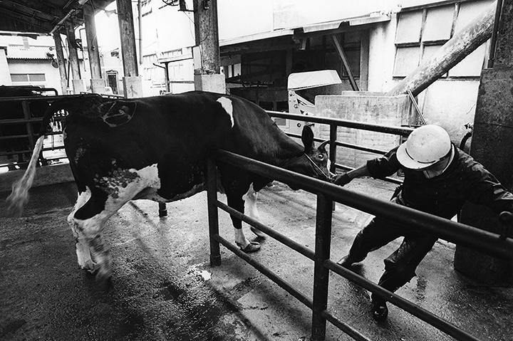 『屠場〈とば〉』松原、大阪 1986年 ©Motohashi Seiichi