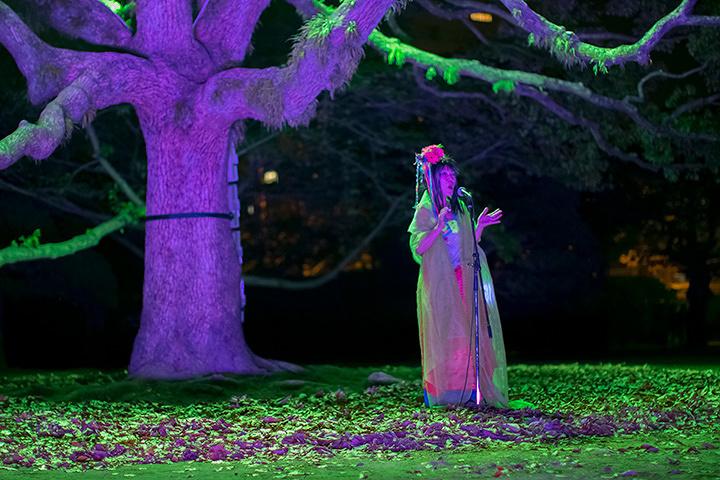 『Under the Camphor tree』徳島LEDアートフェスティバル 2013