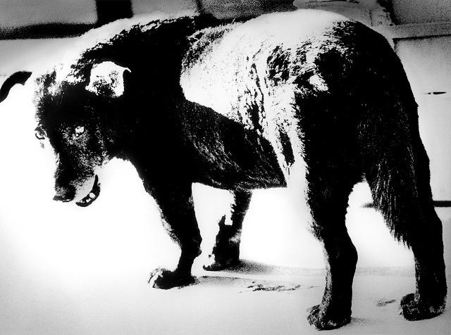 森山大道『三沢の犬』