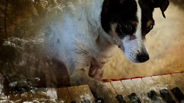 『ハート・オブ・ドッグ ~犬が教えてくれた人生の練習~』 ©2015 Canal Street Communications, Inc