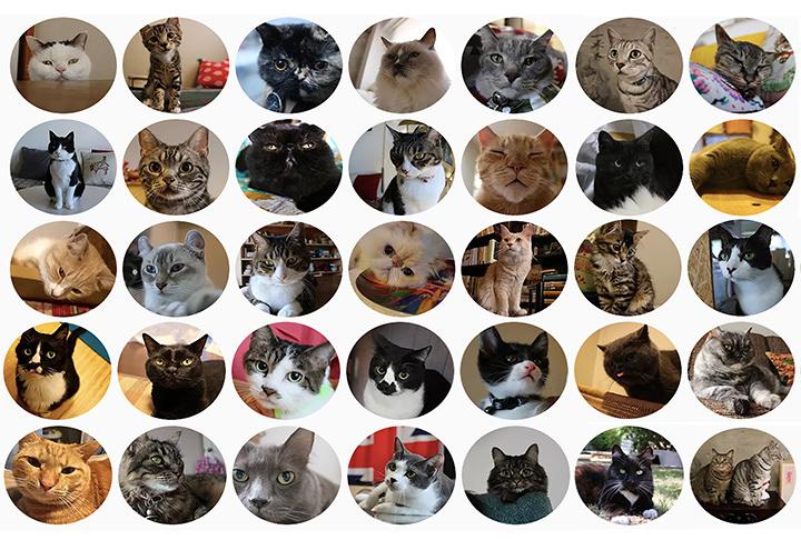 『ネコのいる暮らし展 ~CAT LIFESTYLE~』ビジュアル
