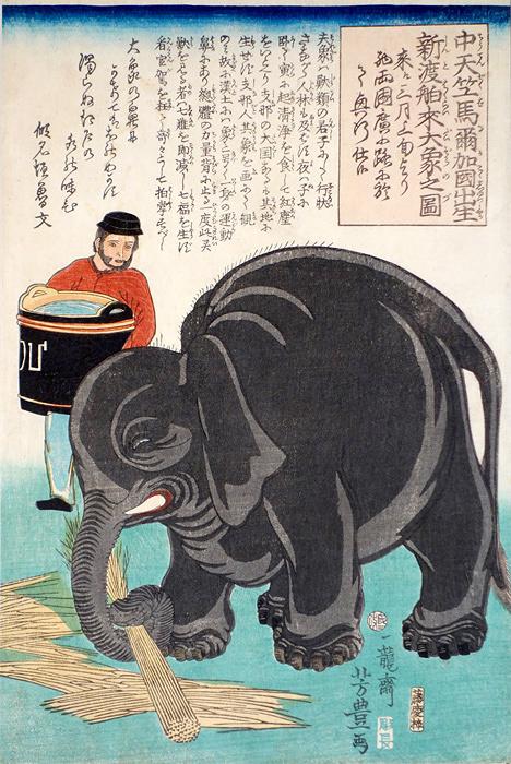 歌川芳豊『中天竺馬爾加国出生新渡舶来大象之図』