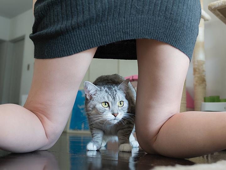 青山裕企『ネコとフトモモ』より