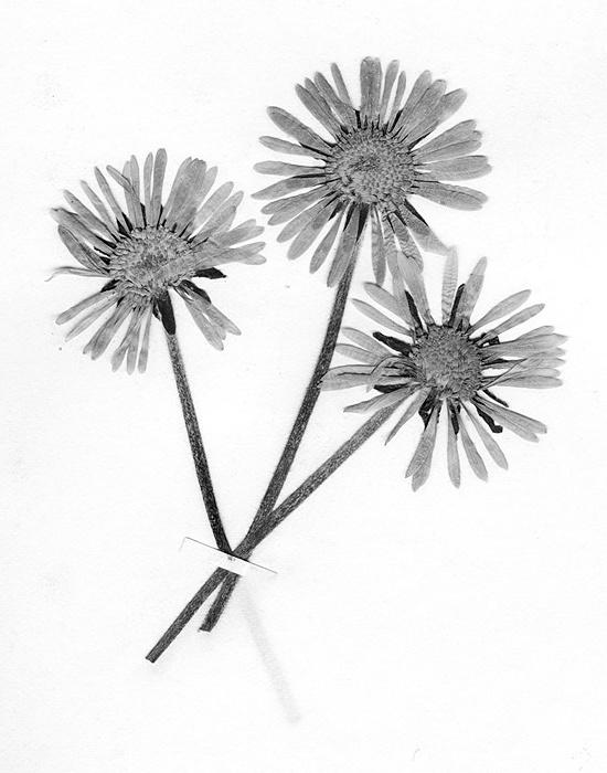 テリ・ワイフェンバック『The Politics of Flowers』(2004)©Terri Weifenbach