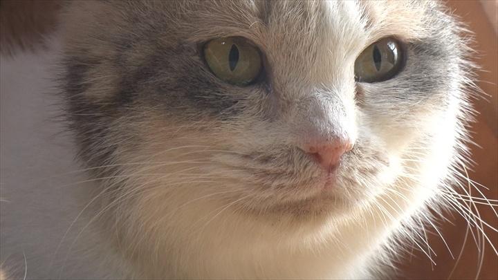 『ねこあつめの家』に出演する猫 ©2017 Hit-Point/『映画ねこあつめ』製作委員会