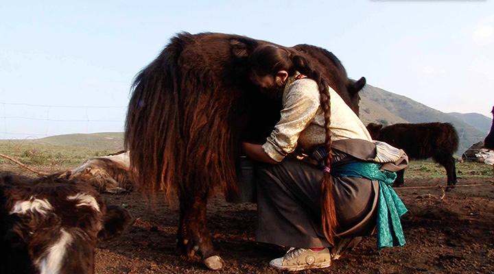 『チベット牧畜民の一日』 ©