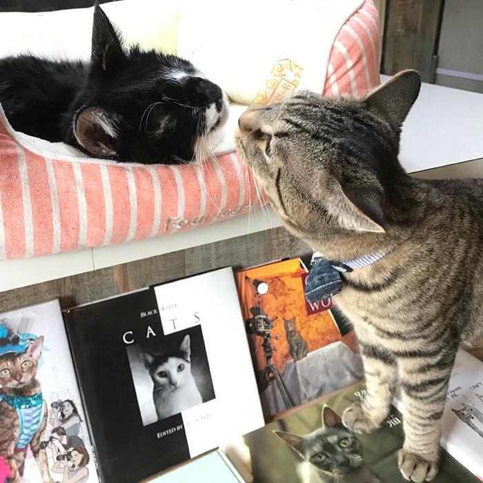 「Cat's Meow Books」イメージビジュアル