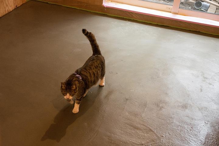 売り場の床に足あとをつける猫たち