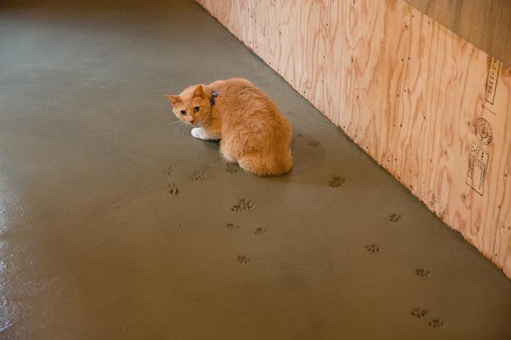 売り場の床に足あとをつける猫