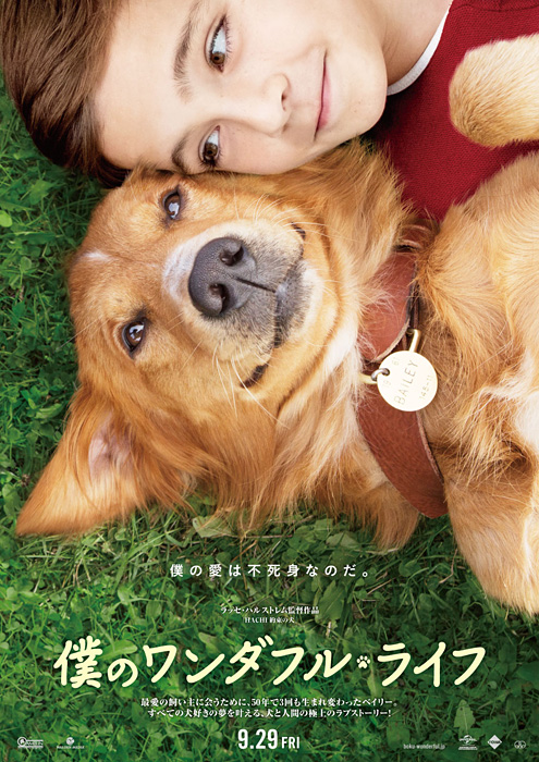 What Is A Dog S Purpose In Life