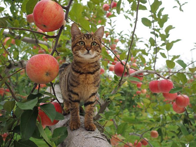 『劇場版 岩合光昭の世界ネコ歩き コトラ家族と世界のいいコたち』 ©Mitsuaki Iwago