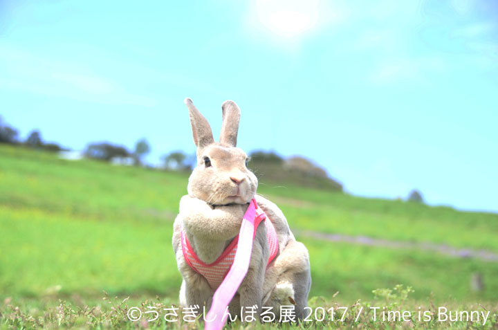 『うさぎしんぼる展 2017』展示作品 ©うさぎしんぼる展 2017 / Time is Bunny