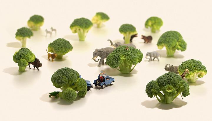 『ブロッコリー1本分のサバンナ』 ©Tatsuya Tanaka