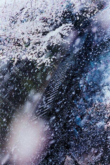 蜷川実花『PLANT A TREE』2011年 Cプリント 48.5×72.8cm ©mika ninagawa Courtesy of Tomio Koyama Gallery