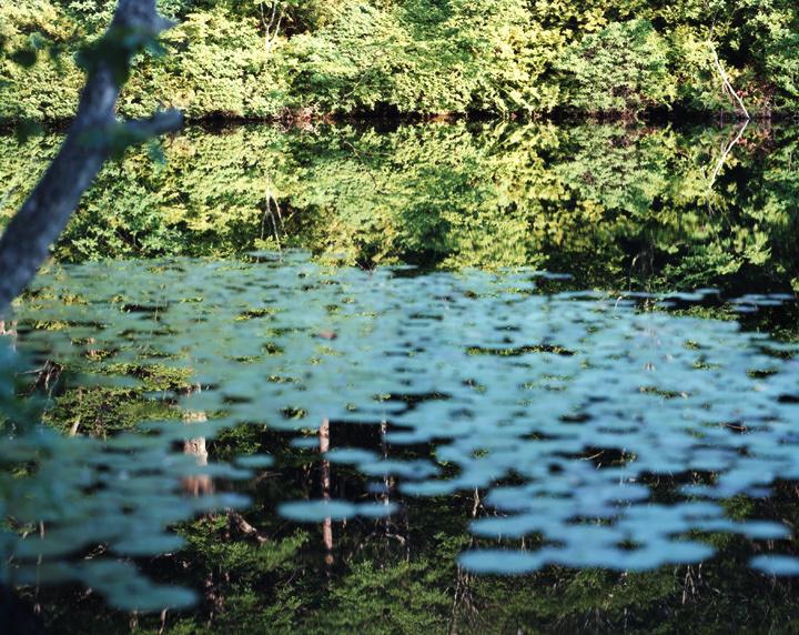 鈴木理策『Water Mirror』 ©Risaku Suzuki, Courtesy of Taka Ishii Gallery