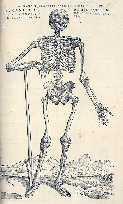 アンドレアス・ヴェサリウス『ファブリカ』初版本 1543年 広島経済大学所蔵