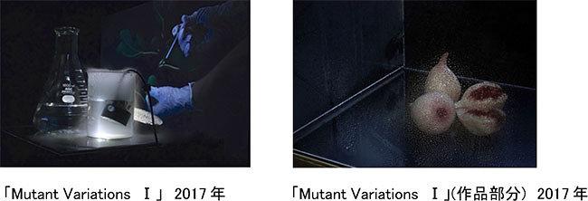 左から:佐藤浩一『Mutant Variations I』2017年、『Mutant Variations I』(部分)2017年