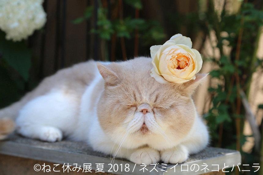 『猫の合同写真&物販展「ねこ休み展 夏 2018」』展示作品
